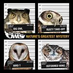 The Four Owls – 2011 – Nature's Greatest Mystery